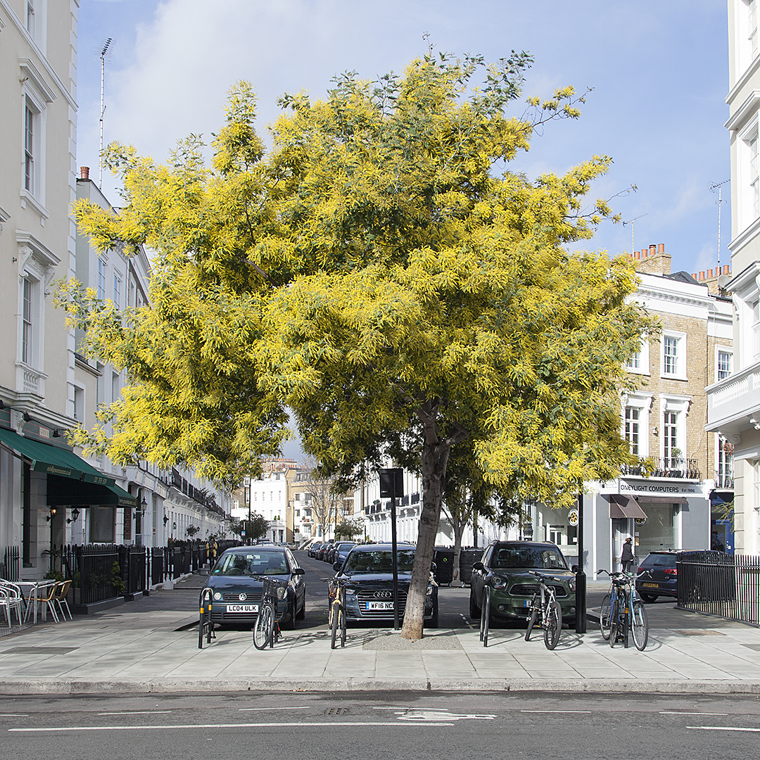 Members' Walking Tour - London's Street Trees: A Field Guide to the Urban Forest